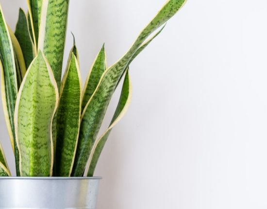 Best Plants for the Home Office or Workplace