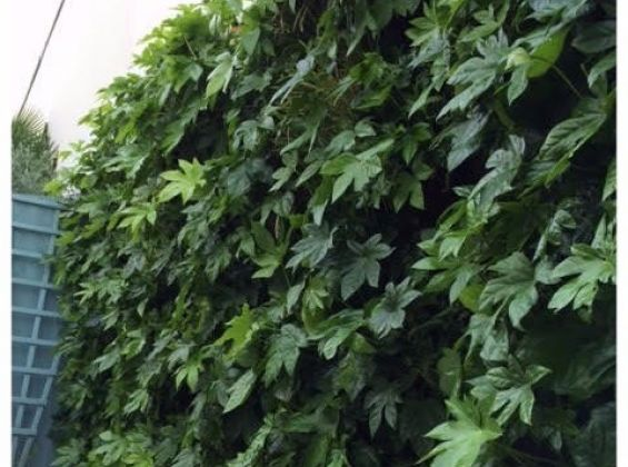 LivePanel green wall for modern town house